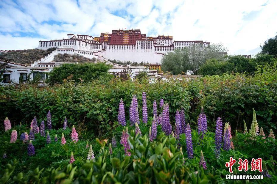 """在""""丁真""""后面真的没有藏族元素吗?(图5)"""