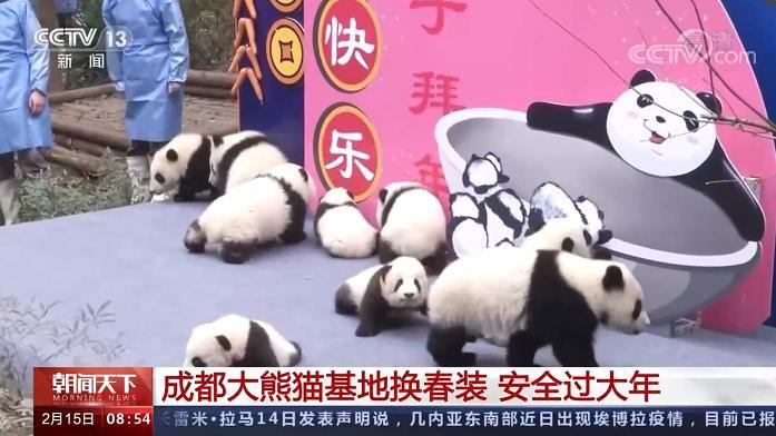 成都大熊猫繁育研究基地换上新装 园区采取限流措施