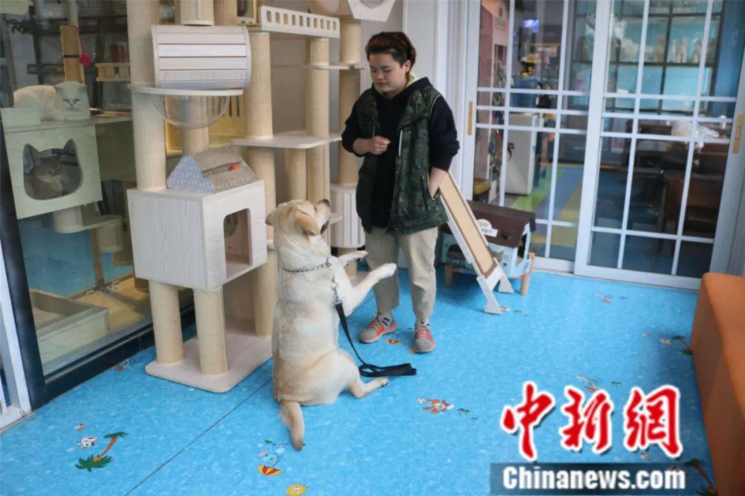 """宠物训练师赚钱吗宠物训练师工资多少? """"宠物经济""""兴起 宠物训练师紧缺"""