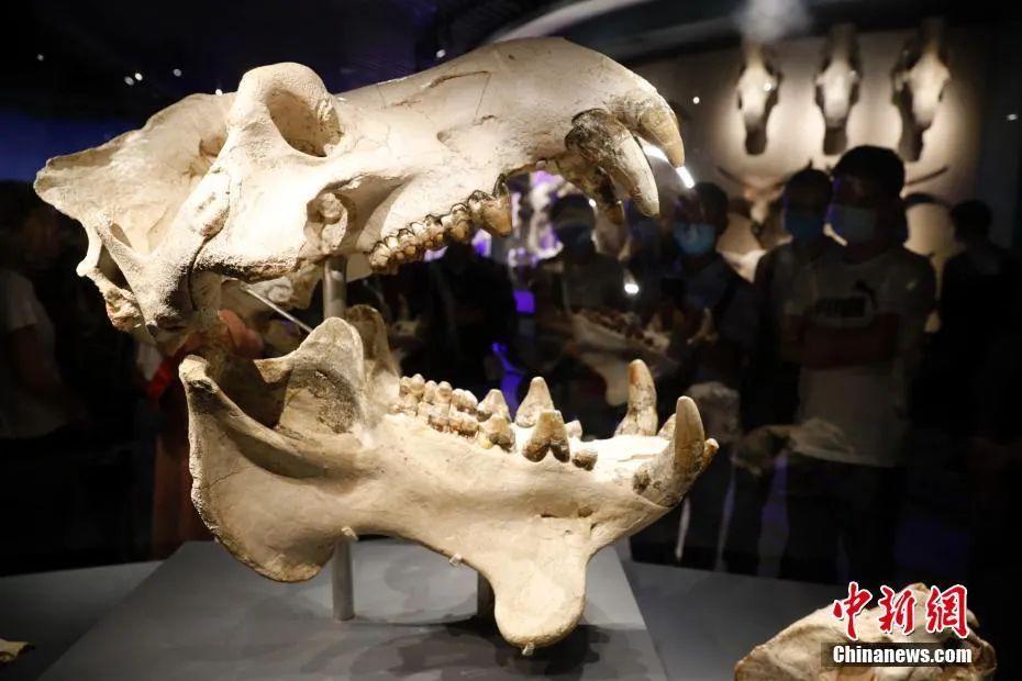 什么?人类的祖先竟然是……