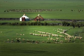 Grassland aids nation's green development drive