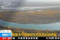塔里木河胡杨林生态系统启动修复