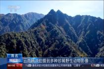 云南騰沖拍攝到多種珍稀野生動物影像