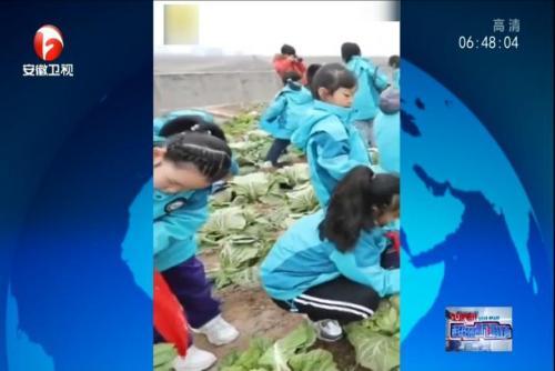 小学教学楼楼顶开辟700平米菜园