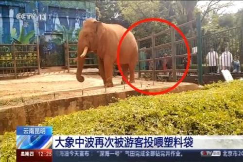大象中波再次被游客投喂塑料袋