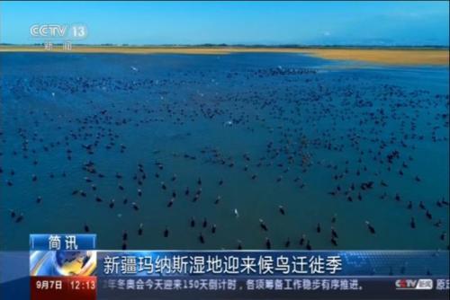 新疆玛纳斯湿地迎来候鸟迁徙季