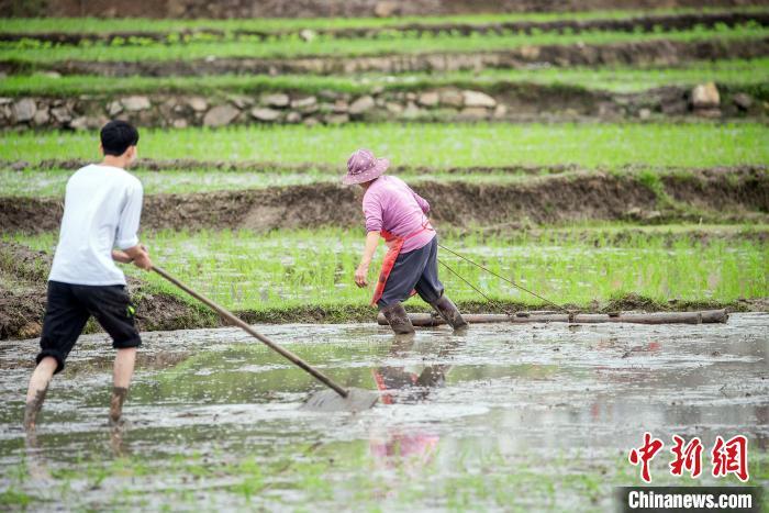 农民正在田间忙碌。 何华文 摄