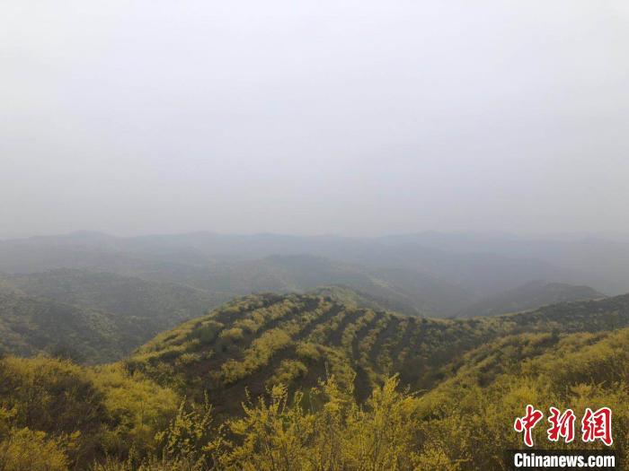 山西药企高校发力药茶研发:建立高质量药茶体系 打造成中国第七大茶系