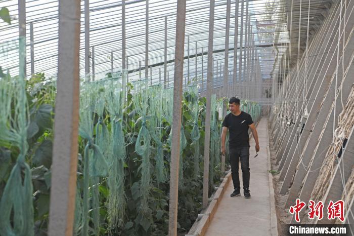 温室大棚里,24岁小伙韩吉明如往常一般忙碌着,回家种地已近一年的他,皮肤晒得黝黑,脸颊有了西北人的高原红。 杨艳敏 摄