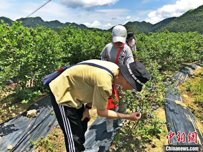 首届福州永泰蓝莓文化节开幕 小蓝莓助力乡村振兴