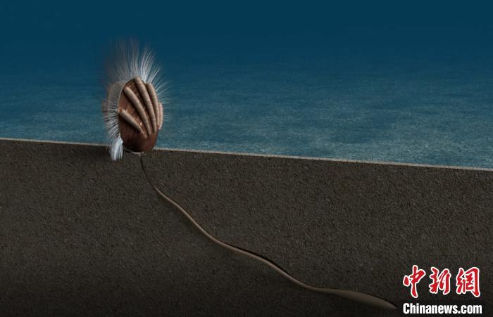 距今约5.12亿年 中外合作研究发现地球已知最古老寄生关系