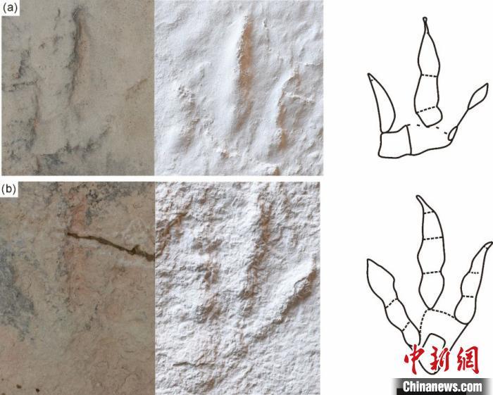 跟垫亚洲足迹野外化石照片、模型及线条图(比例尺为10cm)。汪筱林团队 供图