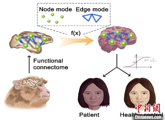 中国科学家新研究解析人类自闭症和强迫症的神经环路机制