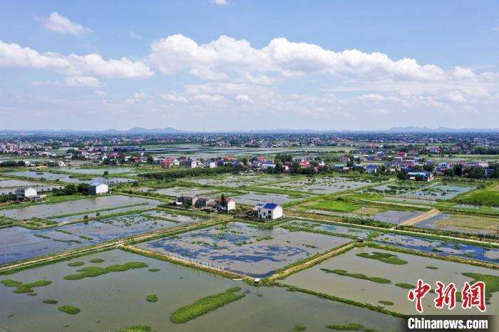 村内的众多荷花池,用来养殖小龙虾、鱼等。 杨华峰 摄