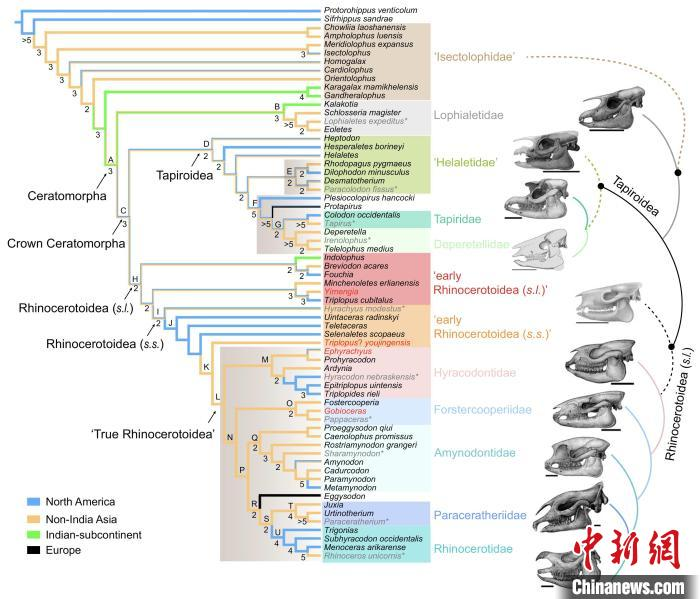 基于简约法的角形类系统发育分析和祖先类群地理分布重建(头骨复原图:陈瑜)。中科院古脊椎所 供图