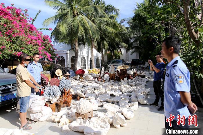 海南破获特大案件:查扣一级保护动物及制品981个
