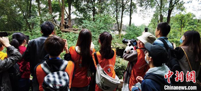 两岸学生参观成都大熊猫繁育研究基地。四川省海峡两岸交流促进会供图