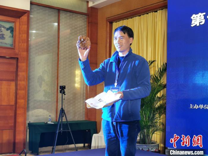 中国目前最大白松露现身云南620克拍出7.2万元人民币