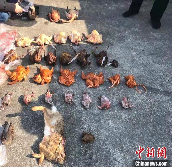 四川梓潼:5人贪吃野味 使用气枪等工具猎杀野生动物被抓获
