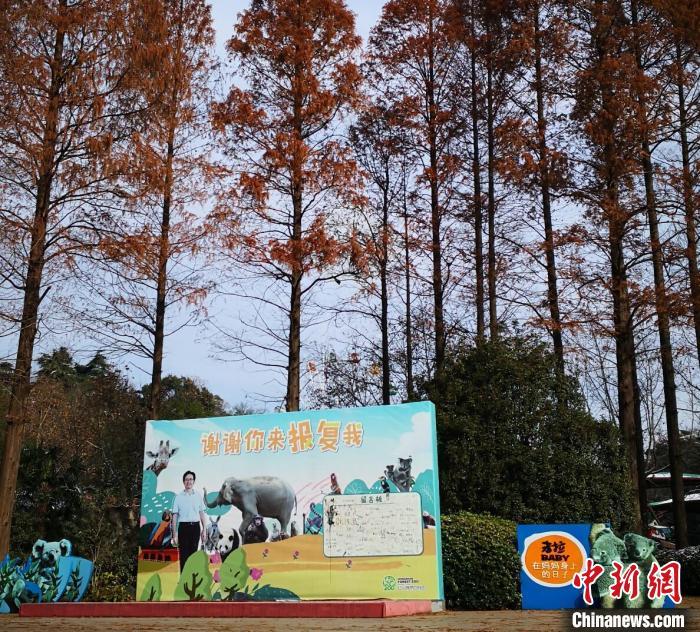 """南京的这座动物园:让全城人连夜赶着认养""""宝宝"""""""