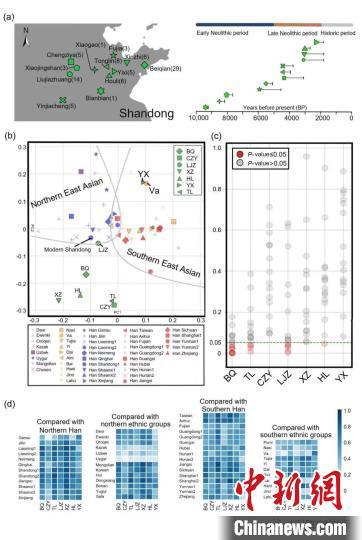 古代山东人群线粒体基因组分析。中科院古脊椎所付巧妹研究团队 供图 供图 摄