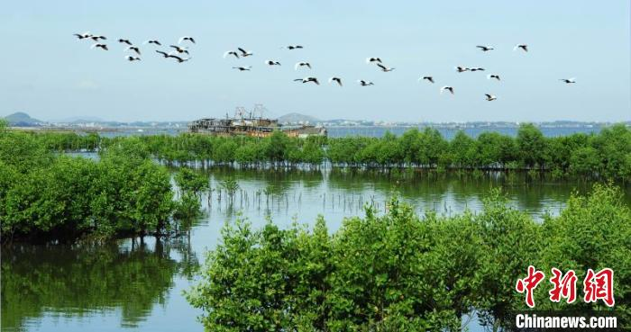 廣東將全面推進林業生態修復工作高質量發展,著力提高森林質量和碳匯能力