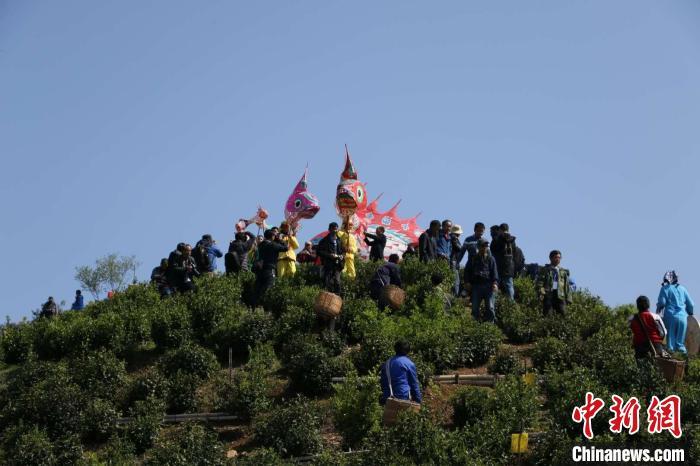 安徽歙县探索茶旅融合 激发高山茶园生态经济活力