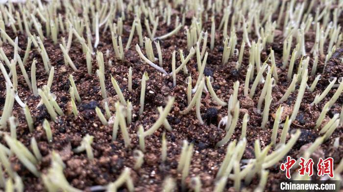 浙江春播种子供种达90% 价格较去年略涨