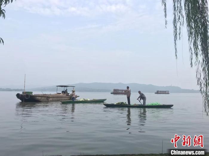 图为工作人员在西湖水面作业。 江杨烨 摄