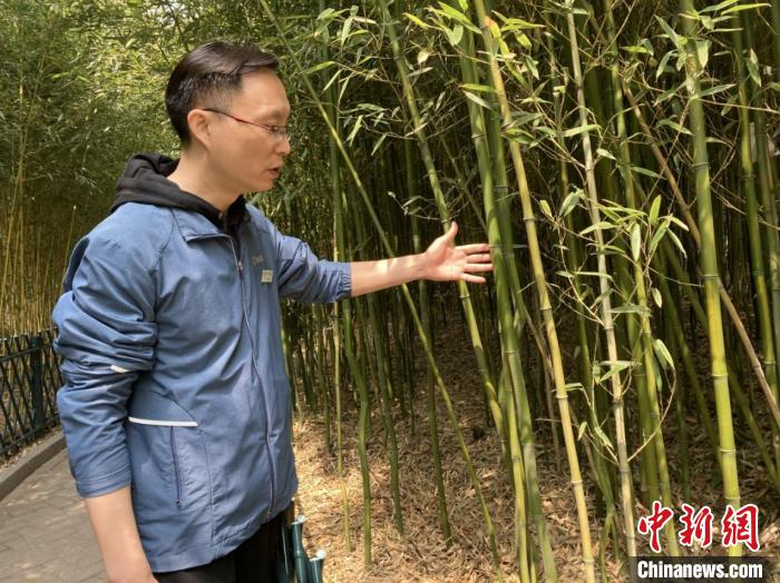 紫竹院公园园林科技科高级工程师冯小虎介绍公园内竹子 徐婧 摄