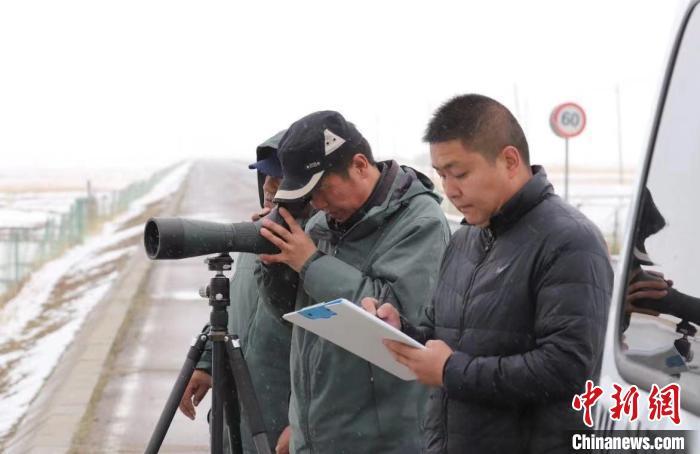 图为工作人员正在进行监测记录。 青海湖国家级自然保护区管理局供图