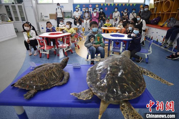 海龟科普课堂寓教于乐。 泱波 摄
