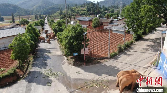图为6月4日在晋宁双河乡监测到的象群。 云南省森林消防总队提供
