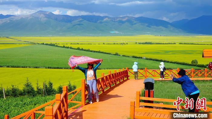图为游客在海北州门源县百里花海景区。 海东 摄