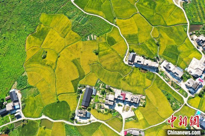 山坳中的稻田与蜿蜒的乡村公路、错落分布的民居、远处的绿山,构成一幅美丽的乡村稻田丰收图。 刘占昆 摄