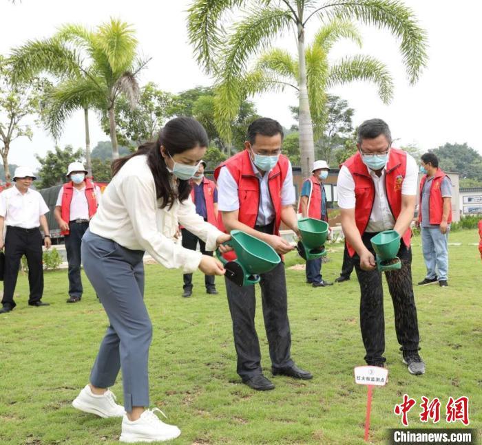 红火蚁在粤快速蔓延 广东加强科学防控力度