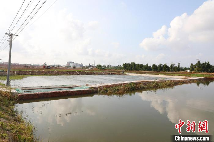 珠三角地区实施百万亩池塘升级改造行动