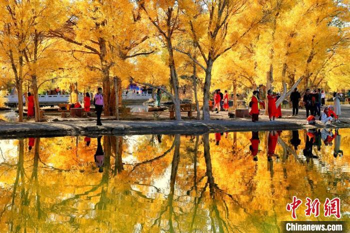 2018年10月下旬,甘肃酒泉市金塔沙漠胡杨林景区叶片金黄,在湛蓝的天空下,恍若仙境。(资料图) 杨志彬 摄