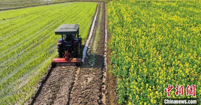 资料图:农民正驾驶拖拉机在翻耕整地作业。 邓和平 摄